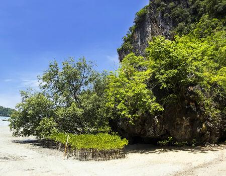 Mangrove at  Railay beach in Krabi