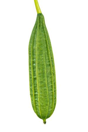 角度のついた: Raw Green Angled Loofah isolated