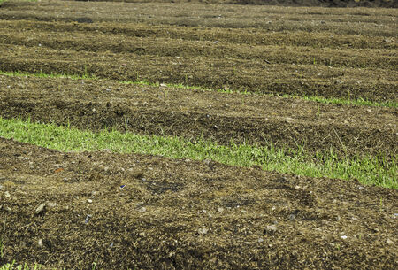 Land field for agriculture growing plant
