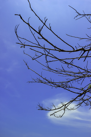 Branch of dry tree on blue sky