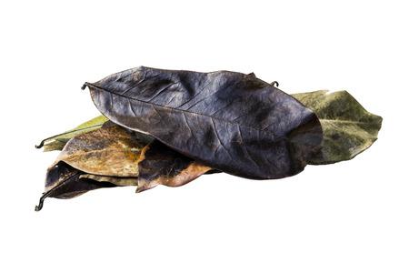 sop: Dry Guyabano leaf isolated  on white Stock Photo