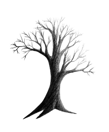 Pencil drawing dry tree isolated on white