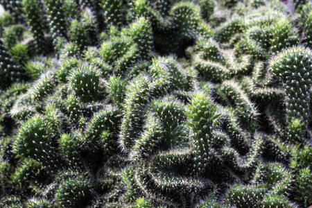 Green Tropical Cactus plant on ground Stock Photo