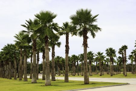 Palm Tree garden in the park sunny day