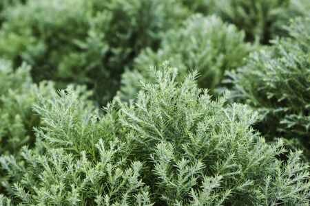 Green fern in nuture tropical