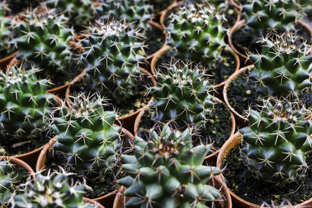 Young Green Cactus in tropical area Stock Photo