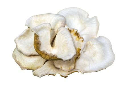 White poison mushtroom isolated on white