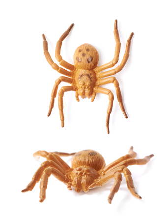 crawly: Fake rubber spider toy isolated over the white background, set of two different foreshortenings