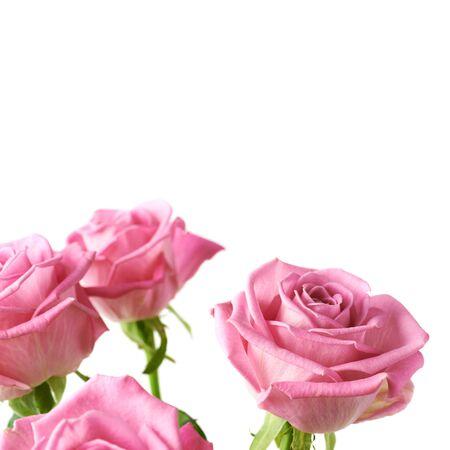 Blumenstrauß der rosa Rosennahaufnahmeschuß lokalisiert über dem weißen Hintergrund als copyspace Hintergrundzusammensetzung