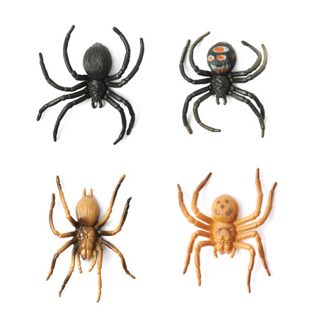 crawly: Fake rubber spider toy isolated over the white background, set of four different foreshortenings Stock Photo
