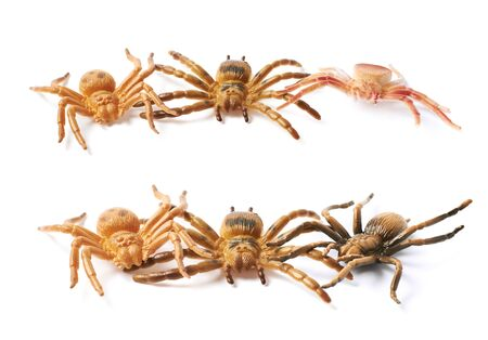 crawly: Pile of few fake rubber spider toys, composition isolated over the white background, set of two different foreshortenings