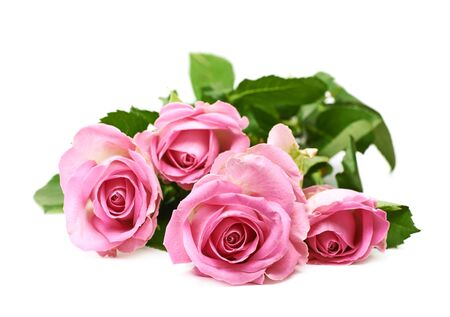 long stem: Pile of pink roses isolated over the white background Stock Photo