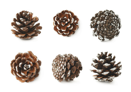 snow cone: Single decorational pine cone covered with the artificial snow, composition isolated over the white background, set of six different foreshortenings
