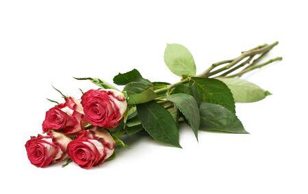 tallo: Pila de cuatro rosas de color blanco y rosa aislada sobre el fondo blanco Foto de archivo