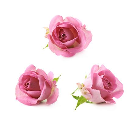 Single roze roos bud geïsoleerd over de witte achtergrond, set van drie verschillende foreshortenings