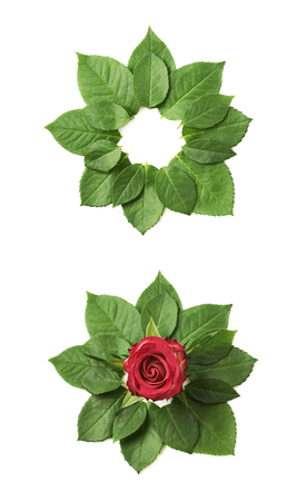 marcos redondos: Rose bud surrounded with green leaves, composition isolated over the white background, set of two different foreshortenings