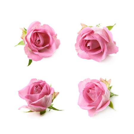 Single rosa Rose Knospe isoliert über den weißen Hintergrund, Satz von vier verschiedenen Verkürzungen