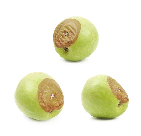 putrid: Rotten green apple fruit isolated over the white background, set of three different foreshortenings Stock Photo