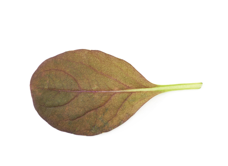 roquette: Fresh salad leaf isolated over the white background