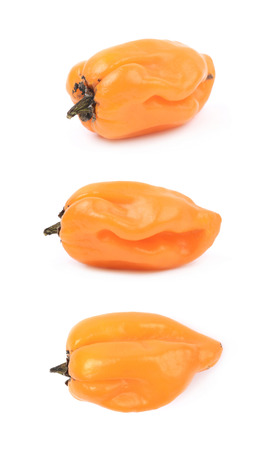 Orange habanero pepper isolated