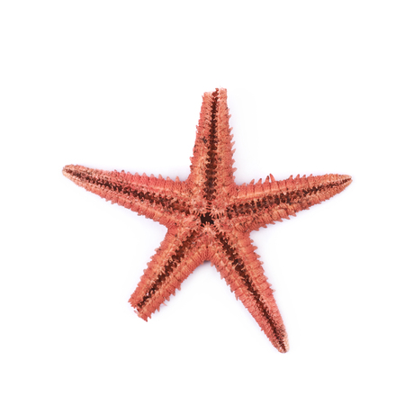 Dried decorational star fish isolated Stock Photo