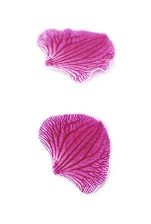 flower petal: Single orchid flower petal isolated