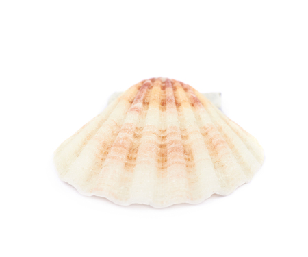 oceanic: Decorational sea shell isolated over the white background Stock Photo