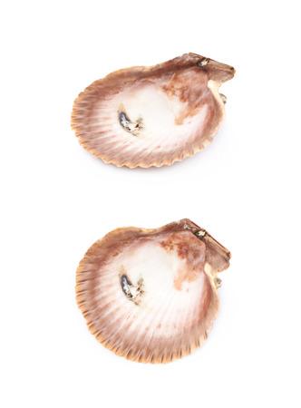 Sea shell isolated Stock Photo