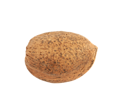 Single almond nut isolated