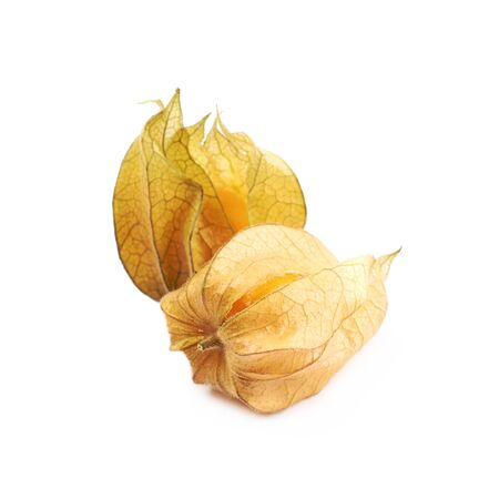 Two physalis fruits with husk
