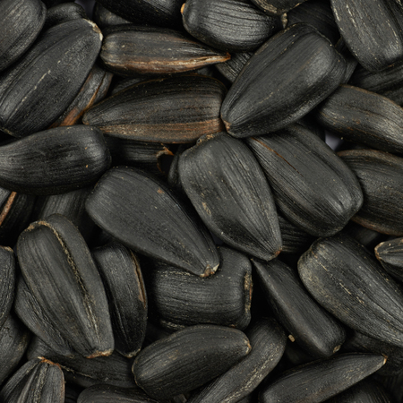 composition: Surface coated with the multiple sunflower seeds as a background texture composition