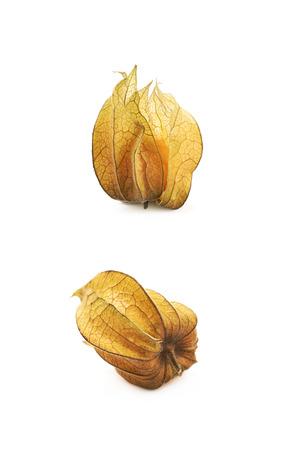 Physalis fruit berry isolated