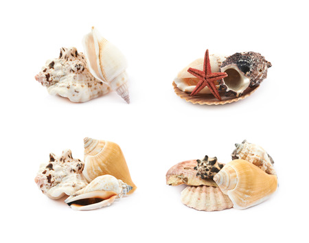 Pile of decorational sea shells isolated over the white background, set of four different foreshortenings