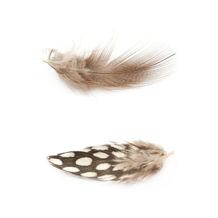 Decorational birds feather isolated over the white background, set of two different foreshortenings