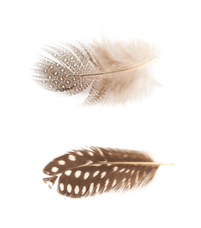 Decorational feather isolated Foto de archivo