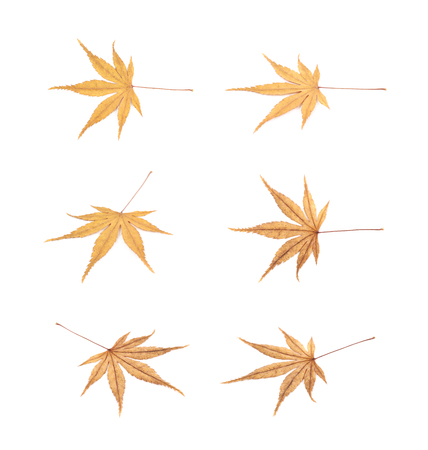 Japanese maple leaf isolated over the white background, set of six different foreshortenings Stock Photo