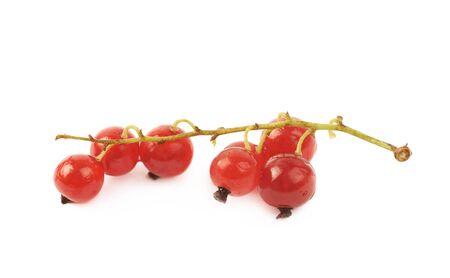 Little branch of red currant berries isolated over the white background Stock Photo