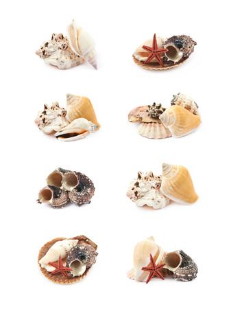 Pile of decorational sea shells isolated over the white background, set of eight different foreshortenings
