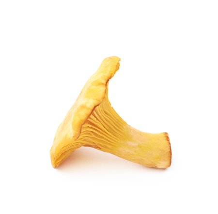 Yellow chanterelle mushroom isolated over the white background Stock Photo