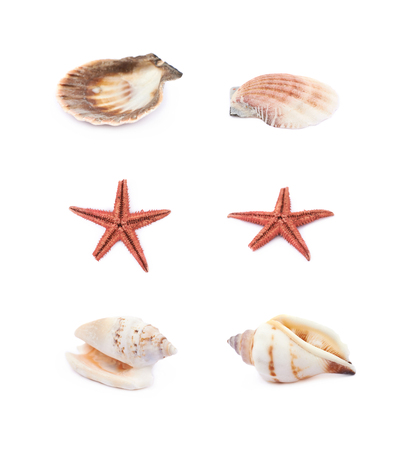 Decorational sea shell isolated over the white background, set of six different foreshortenings