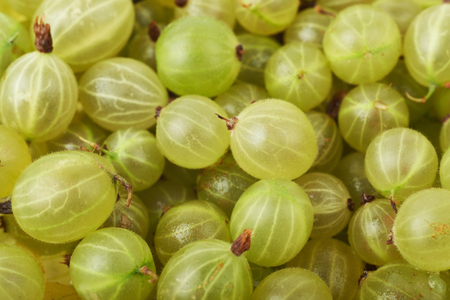 Surface covered with the gooseberries