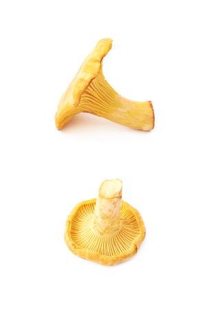 Yellow chanterelle mushroom isolated over the white background , set of several different foreshortenings