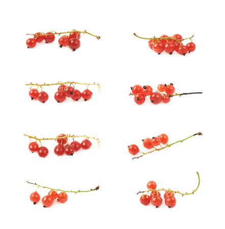 Little branch of red currant berries isolated over the white background , set of several different images