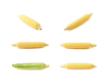 Ear of corn corncob isolated over the white background , set of several different foreshortenings