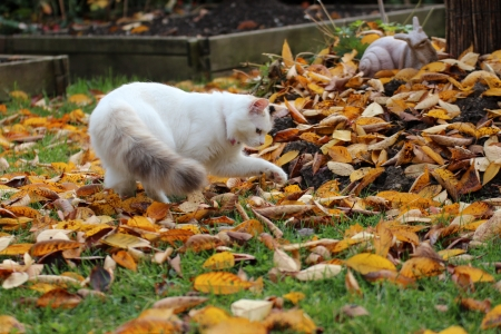 kitten, cat, hunter, autumn photo