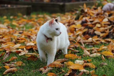 Kitten, cat, autumn photo