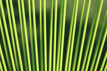 Bamboo, green , zen Stock Photo