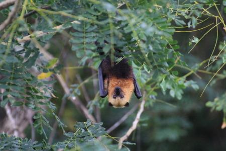 exotism: bat