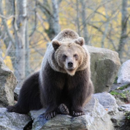 eyes cave: bear Stock Photo