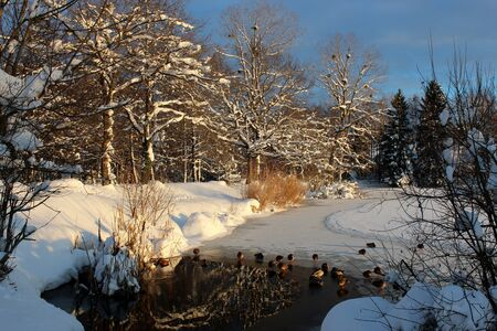 frozen lake with ducks photo